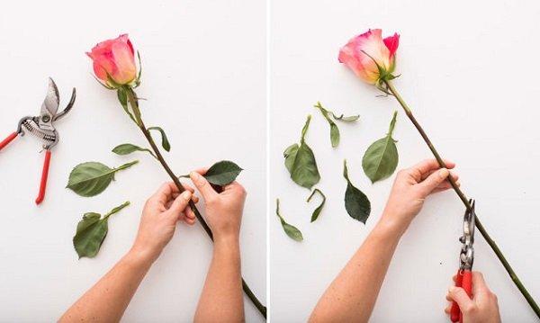 Cách cắm hoa hồng không khó nhưng đòi hỏi người cắm điều gì?