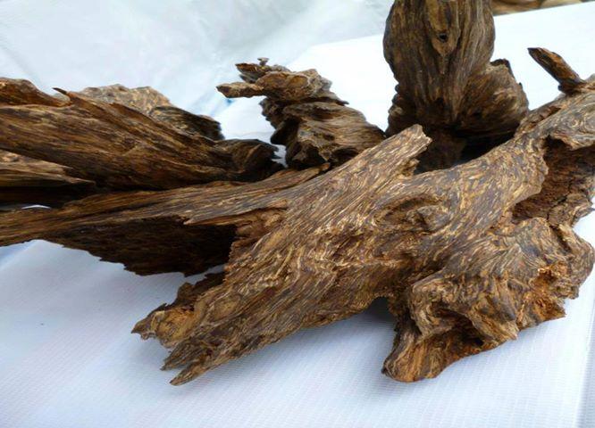 Công dụng của gỗ trầm hương trong đời sống | Trầm hương khánh hòa
